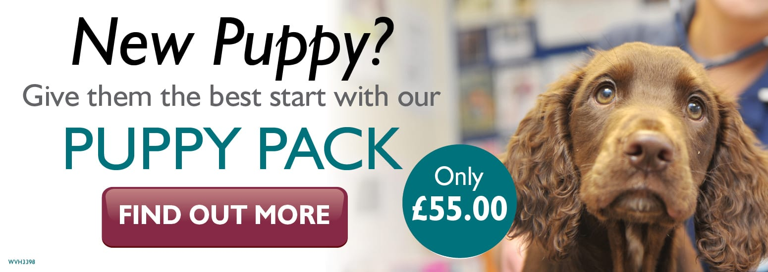Puppy Pack covering puppy injections, flea & worm treatment, and much more for only £55 at vets in Winsford
