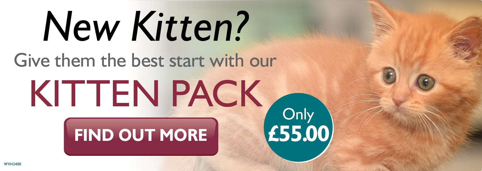 Kitten Pack covering kitten injections, flea & worm treatment, and much more for only £55 at vets in Winsford